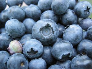 320px-Bunch_of_blueberries,_one_unripe