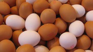 Egg_texture_169clue